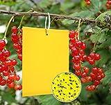 Y.A. LOTUS 20 Gelbfalle Klebrige Insektenfallen, Effizient KirschmadenFalle Gelbtafeln, Doppelseitige Fliegenfänger Sticker für Weiße Fliegen, Blatt Bergmann, Blattläuse, Motten andere Insekten