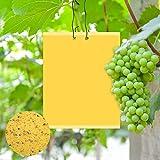 Vegena 30 Stück Gelbtafeln Klebrige Insektenfallen, Beidseitig Gelbsticker Fliegenfänger Sticker Insektenfänger Fliegenfalle für Zimmerpflanzen Gartenarbeit, 20x15cm inkl. 40 Kabelbinder