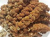 Zoo-Papp Kolbenhirse rot 2kg | 2 kg Hirsekolben Wellensittich Kanarienvogel Nymphensittich Hamster | Rote Hirse Vogelfutter Sittichfutter Exotenfutter Wellensittichfutter Premium