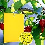 Panngu 20 Gelbfalle Klebrige Insektenfallen, KirschmadenFalle Gelbtafeln, Professionell Gelbsticker Gelbe Klebrige Papiere für Weiße Fliegen,Blattläuse,Blatt Bergmann,Motten andere Insekten